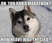 03_funny-dog-meme.jpg